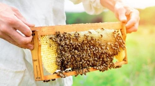 Пчеловодство как дополнительный доход